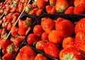 Strawberry baskets rows of fresh Royalty Free Stock Image