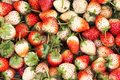 Strawberry berries on the ground.