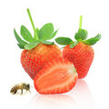 Strawberry berry with green leaf and honey bee Stock Photos