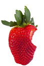 Strawberry bitten single on one side shot front on on a white background Royalty Free Stock Photography