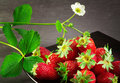 Strawberry in a black plate over ardesia Stock Images