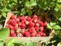 Strawberry at box Royalty Free Stock Photo