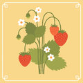 Strawberry bush vector illustration of in white frame Stock Photography