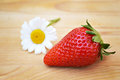 Strawberry and daisy fresh flower on wooden background Royalty Free Stock Images