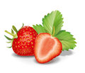 Strawberry detailed vector illustartion for best prints and other uses Stock Images