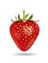 Strawberry detailed vector illustration for best prints and other uses Stock Image