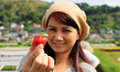Strawberry Farm in Baguio City, Philippines Royalty Free Stock Photo