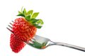 Strawberry in fork isolated on white with copyspace Royalty Free Stock Photos