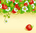 Strawberry frame 3. Red berry and white flower Royalty Free Stock Photo