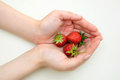 Strawberry in hand Stock Photo