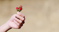 Strawberry on the hand Royalty Free Stock Photo