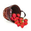 Strawberry harvest spilling pail of strawberries over a white background Royalty Free Stock Photo