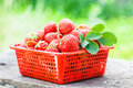 Strawberry heap in red bowl Stock Photography