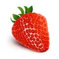 Strawberry isolated on white background-Vector Illustration
