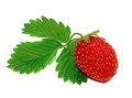 Strawberry with leaf isolated straw berry Stock Photos