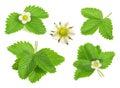 Strawberry leaf isolated on white background Royalty Free Stock Photo