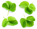 Strawberry leaf isolated on white. Collection Royalty Free Stock Photo
