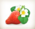 Strawberry with leaves and flowers illustration on white background Stock Images