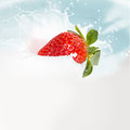 Strawberry milk splash empty white background Stock Image