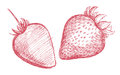 Strawberry pencil sketch Royalty Free Stock Photos