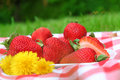 Strawberry picnic Royalty Free Stock Photos