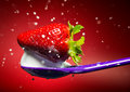 Strawberry on the purple spoon and milk splash. Red background. Royalty Free Stock Photo