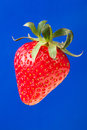 Strawberry single on blue background Royalty Free Stock Photography