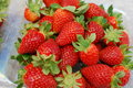 Strawberry single well formed with leaves in group of strawberries Royalty Free Stock Images