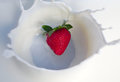 Strawberry splash milkshake cream yogurt milk dairy product Royalty Free Stock Photo