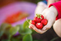 Strawberry in hand. Outdoor summer fun. Royalty Free Stock Photo