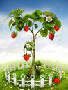 Strawberry tree the beautiful garden with Royalty Free Stock Image