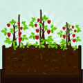 Strawberry tree and compost