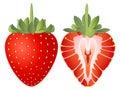Strawberry Vector Illustration Royalty Free Stock Photo