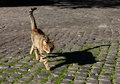 Stray cat affectionate in rome Royalty Free Stock Photography