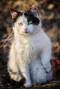 Stray cat black and white urban sitting at ground Royalty Free Stock Photo