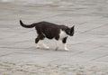 Stray cat roaming the streets Stock Photos