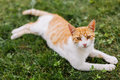 Stray cat sitting in grass Royalty Free Stock Photography