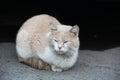 Stray cat standing on the asphalt Stock Photos