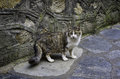 Stray cat a on a stone pavement Stock Photography