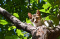 Stray cat stuck on the tree with desperate look Royalty Free Stock Photos
