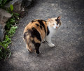 Stray cat walking on the asphalt Royalty Free Stock Photography