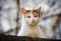 Stray cat white urban looking in camera Royalty Free Stock Images