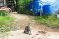 Stray cat young at the backyard Royalty Free Stock Images