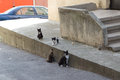 Stray cats walking next to a concrete wall Stock Photo