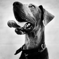 Stray dog dogs photographed in an animal shelter Stock Photos