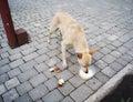 Stray dog eats the food outdoor Royalty Free Stock Photos