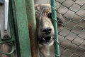 STRAY DOG - GATE Royalty Free Stock Photo
