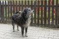 Stray dog looking alert
