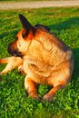 Stray mutt dog Royalty Free Stock Photo