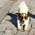 Stray dog phot of cute stretching Royalty Free Stock Image